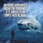 Frases: Aprende a nadar con tiburones