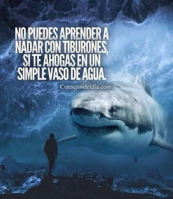 tiburon imagenes