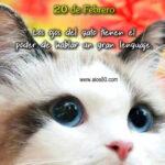 Dia del gato 20 de febrero 2021