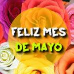 Imagenes de Feliz mes de Mayo con frases